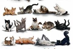 Йога кота фото2-1