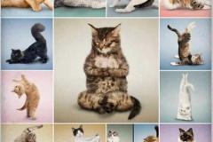 Йога коты фото500