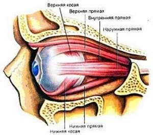 Помощь йоги для улучшения зрения Мышцы глаза